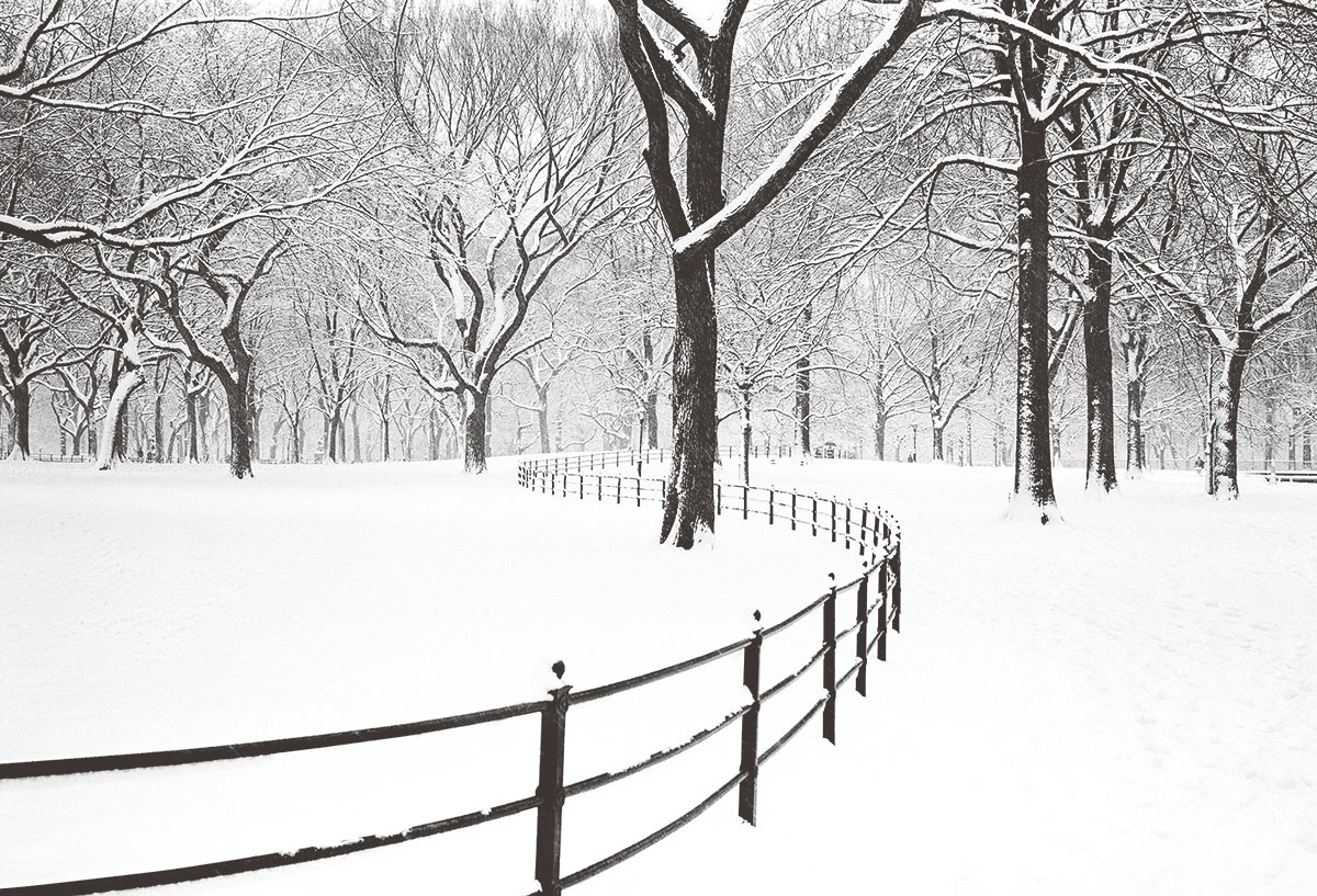 Photo of Randy Riviere - Fences